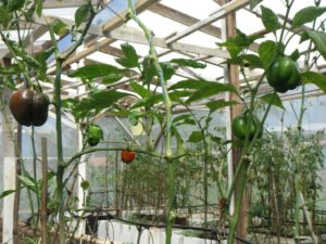 Rondel Village greenhouse