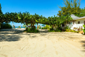 sandy beach and foliage